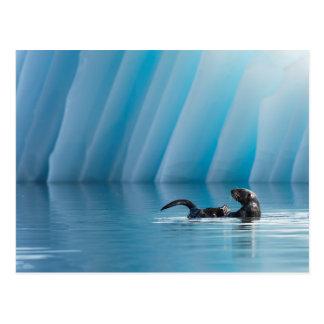 Playful Sea Otter Postcard