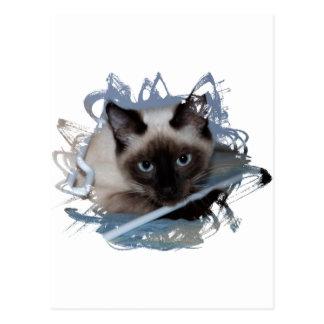 Playful Siamese Postcard