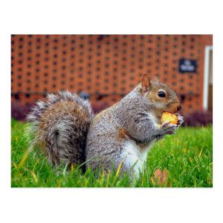 Playful Squirrel Postcards