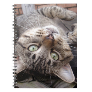 Playful Striped Feral Tabby Cat Notebook