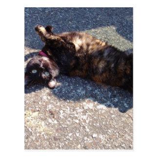 Playful Tortoiseshell Cat Post Card