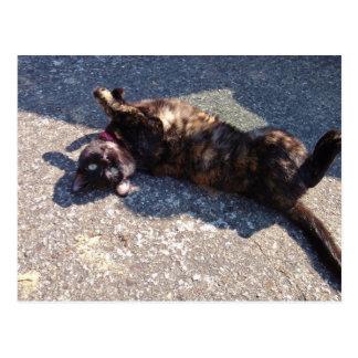 Playful Tortoiseshell Cat Postcards
