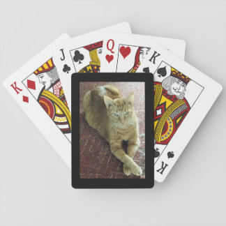 "Playing cards ""Tigger"" the cat"