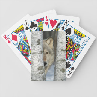 playing cards with pic of gray wolf in birch trees