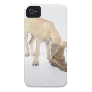 playing,friendly,curiosity iPhone 4 Case-Mate case