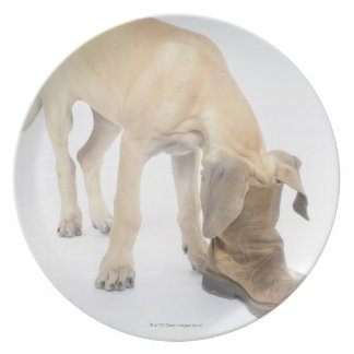 playing,friendly,curiosity dinner plates