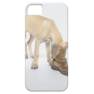 playing,friendly,curiosity iPhone 5 case
