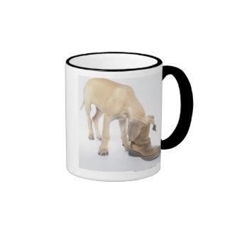 playing,friendly,curiosity mugs