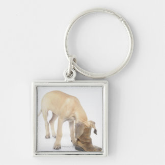 playing,friendly,curiosity Silver-Colored square key ring