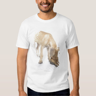 playing,friendly,curiosity tee shirts