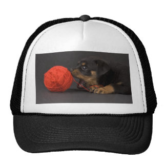 Playing Puppy 4 Hats