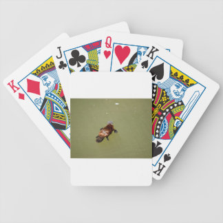PLAYPUS EUNGELLA NATIONAL PARK AUSTRALIA BICYCLE PLAYING CARDS