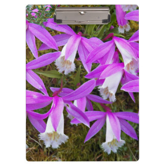 Pleione Orchids Floral Clipboard