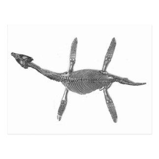 Plesiosaurus Skeleton Antique Print Postcard
