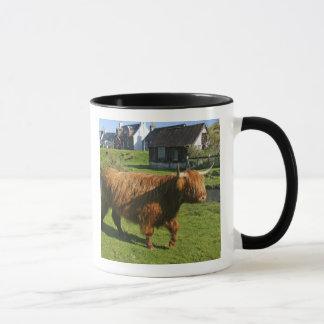Plockton, Scotland. Hairy Coooo's (cows) doing