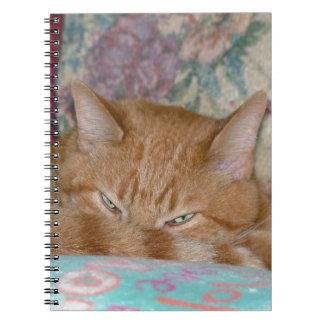 Plotting Notebooks