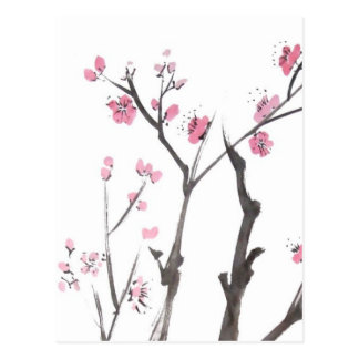Plum Blossom Branches in Spring Postcard