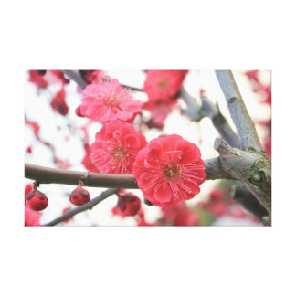 plum blossom spring pink germination stretched canvas print