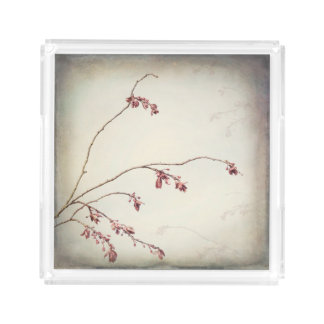 Plum Tree Branch with Spring Buds | Seabeck, WA Acrylic Tray