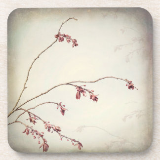 Plum Tree Branch with Spring Buds | Seabeck, WA Coaster
