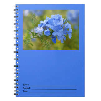 Plumbago - Blue Summer Flowers Picture Spiral Notebooks