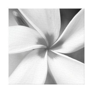 Plumeria - Black and White Macro Portrait Canvas Print
