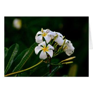 Plumeria Flower, Maui Card