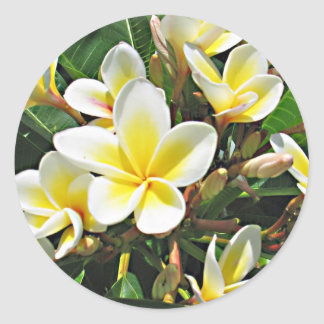 Plumeria Flower Sticker