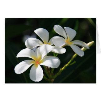 Plumeria Flowers Card