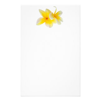 Plumeria Flowers Hawaiian White Yellow Frangipani Stationery