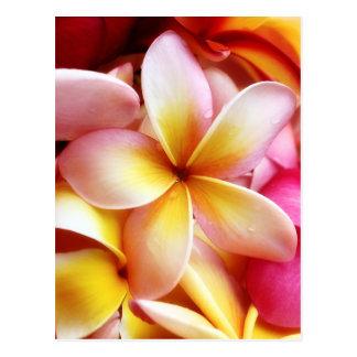Plumeria Frangipani Hawaii Flower Customised Blank Postcard