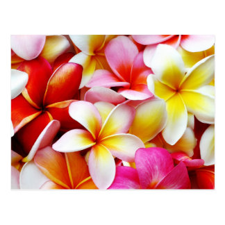 Plumeria Frangipani Hawaii Flower Customised Postcard