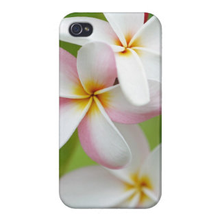 Plumeria Frangipani Hawaii Flower Customized Blank Cover For iPhone 4