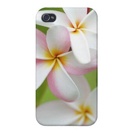 Plumeria Frangipani Hawaii Flower Customized Blank iPhone 4/4S Case