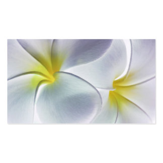 Plumeria Frangipani Hawaii Flower Customized Blank Pack Of Standard Business Cards