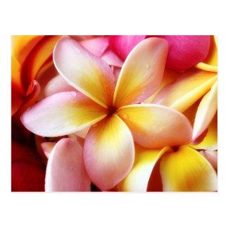 Plumeria Frangipani Hawaii Flower Customized Blank Postcard