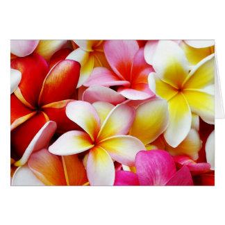 Plumeria Frangipani Hawaii Flower Hawaiian Flowers Card