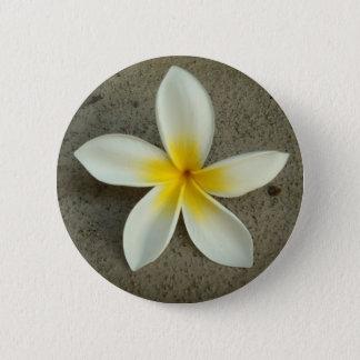 Plumeria hawaii flower button