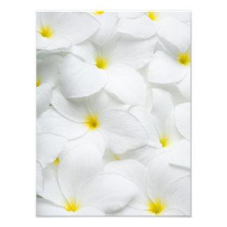Plumeria Lei Flowers Personalized Hawaiian Flower Art Photo