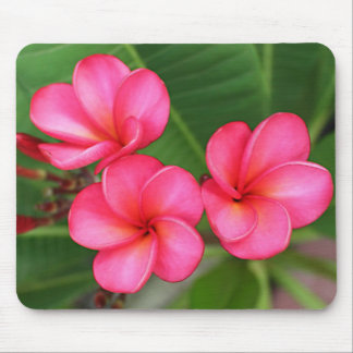 Plumeria - Miami Rose on mousepad
