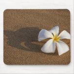 Plumeria on sandy beach, Maui, Hawaii, USA