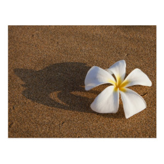 Plumeria on sandy beach, Maui, Hawaii, USA Postcard