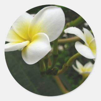 Plumeria Rubra Macro Classic Round Sticker