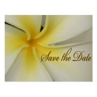 Plumeria Save the Date Post Card