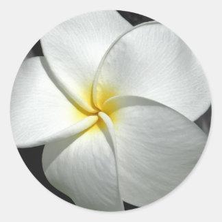 Plumeria Sticker
