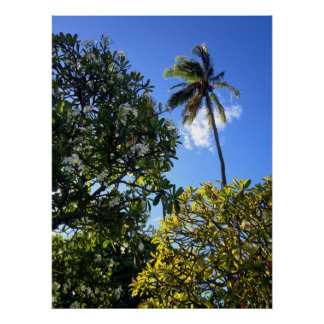 Plumerias and Coconut Palm Poster