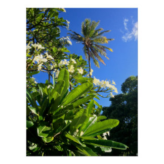Plumerias and Coconut Palm Posters