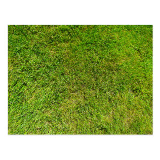 Plush Green Grass Pattern Texture Background Postcard