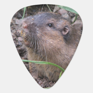 Pocket Gopher Guitar Pick