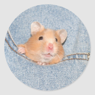 Pocket hamster sticker